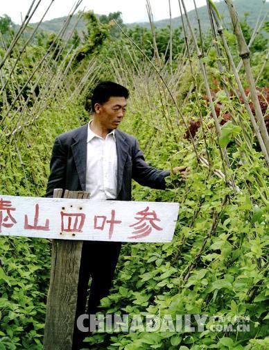 【中国梦·实践者】他让泰山名药造福千家万户