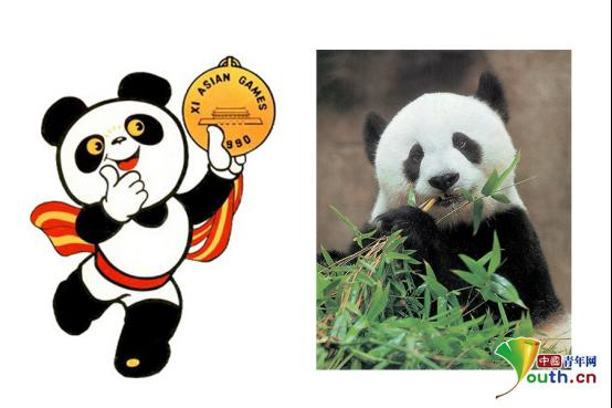 """""""熊猫爸爸""""陈玉村:""""巴斯""""是我的孩子 我想陪她走到最后"""