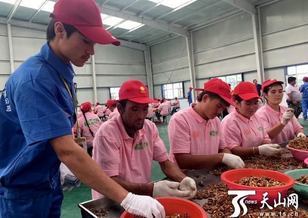 中国梦·脱贫攻坚在新疆 小核桃做出大文章