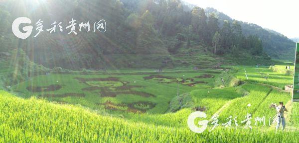 【中国梦·践行者】熊玉唐:为稻田增收致富开新